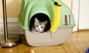 Закрытый туалет для кошек фото