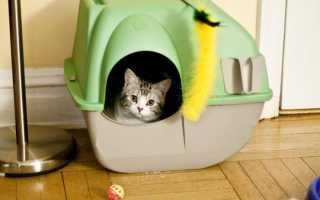 Встроенный туалет для кошки