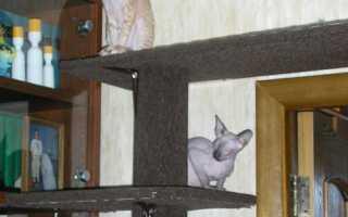 Как сделать лестницу для кошки
